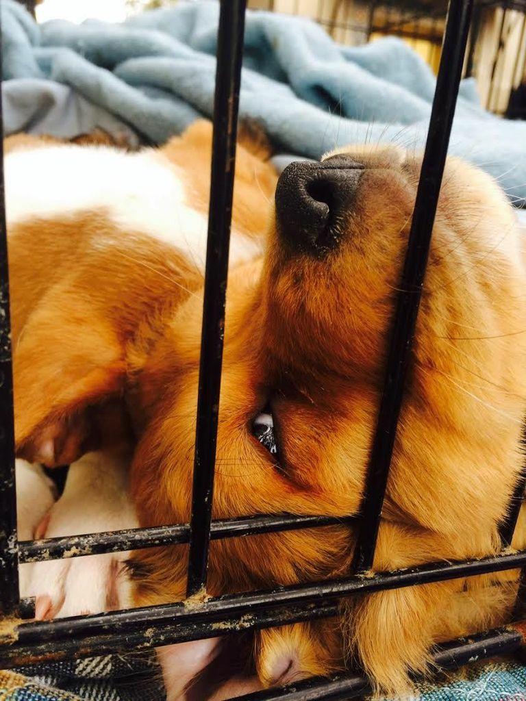 6. founddog