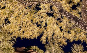 tree_lights_photo_by_laura_wilson.204_preview